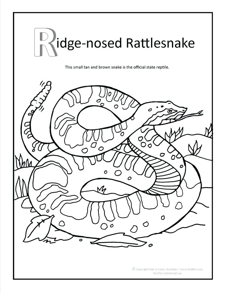 736x952 Rattlesnake Coloring Pages Ridge Nosed Rattlesnake Coloring Page
