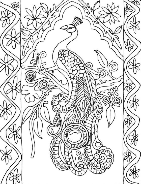 559x730 Free Peacock Difficult Coloring Page For Grown Ups Animal