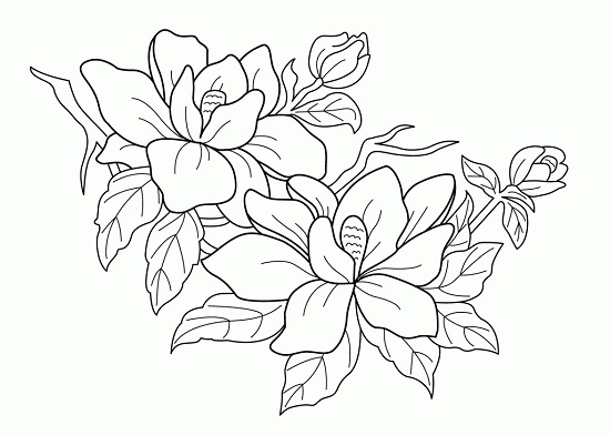 550x392 Free Printable Flower Coloring Pages For Adults Free Printable