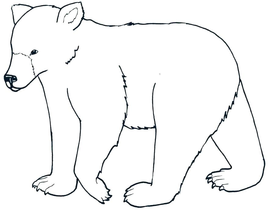 878x697 Wombat Coloring Page Dingo And Wombat In A Pot Coloring Page