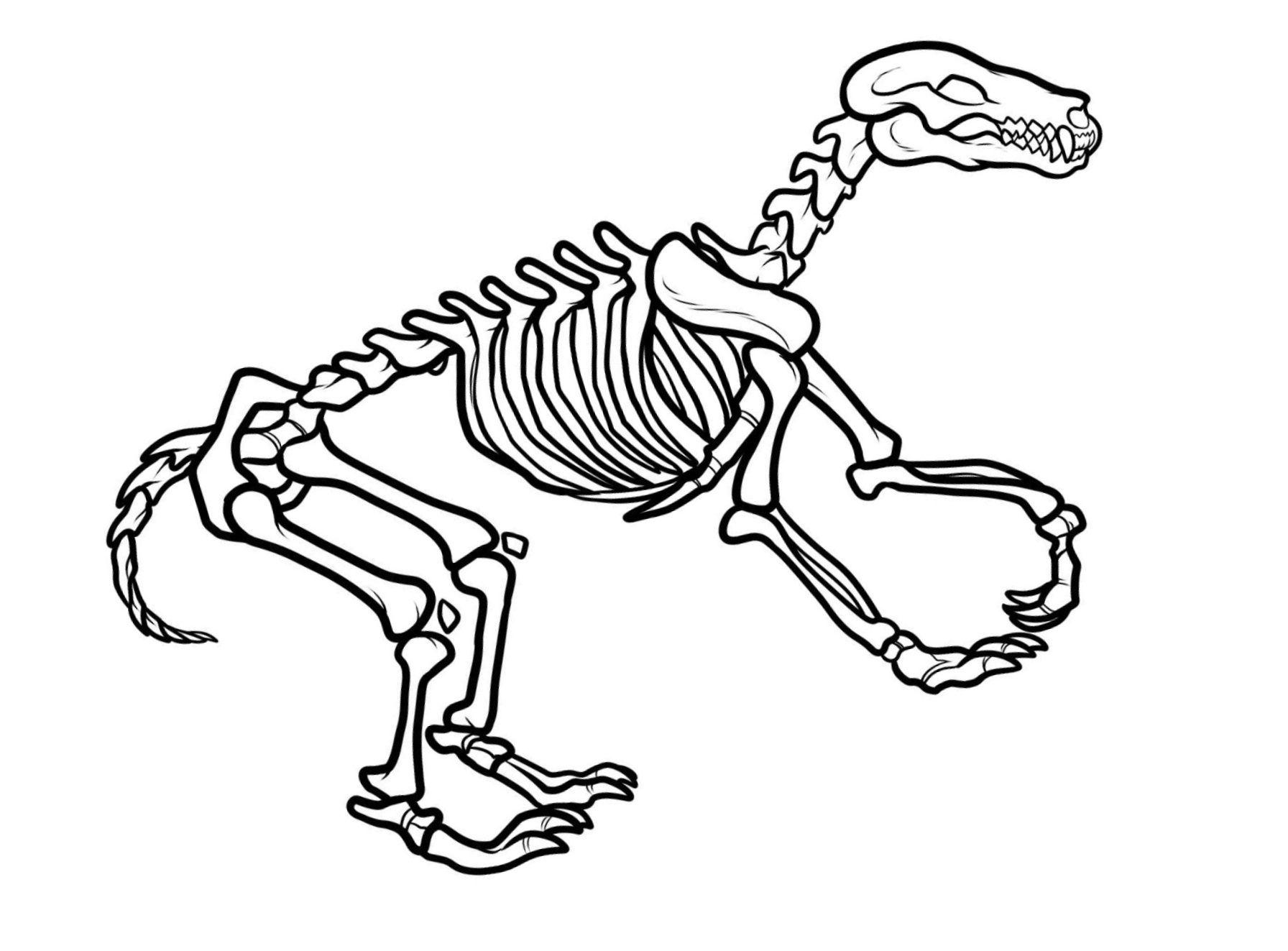 1792x1323 Impressive Dinosaur Bones Coloring Pages Awesome Ideas