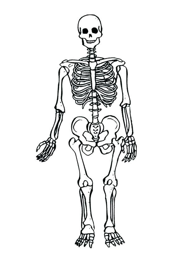600x847 Innovative Dinosaur Bones Coloring Pages Skeleton Page Mainstream