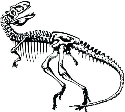 437x391 Bones Coloring Pages Dinosaur Skeleton Coloring Pages