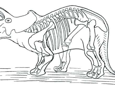 440x330 Dinosaur Fossils Bones Worksheet Dinosaur Skeleton Incredible