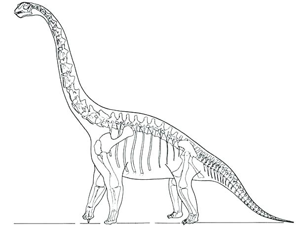 dinosaur fossil coloring pages at free for personal use dinosaur fossil. Black Bedroom Furniture Sets. Home Design Ideas