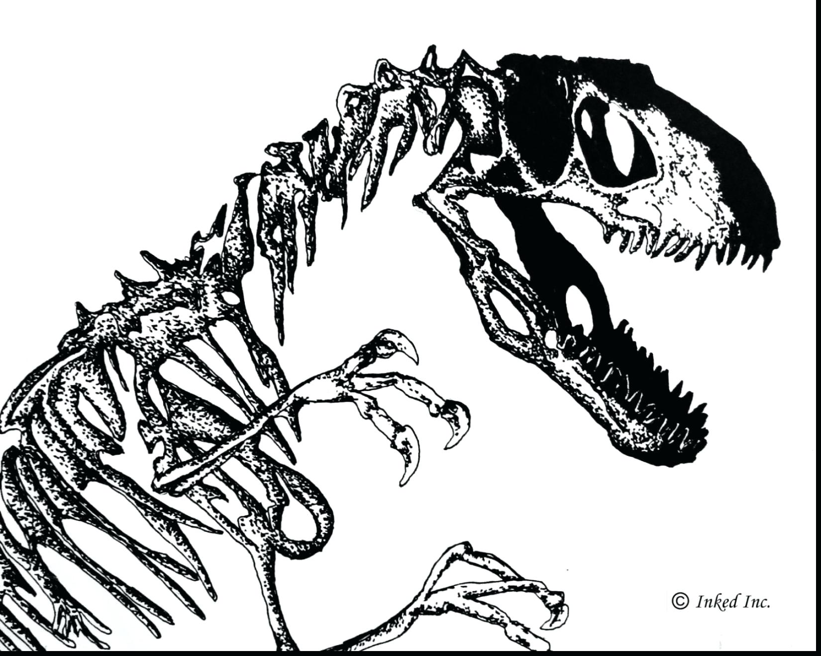 1650x1320 Skeleton Coloring Pages Halloween Dinosaur Fossil Sheet Download
