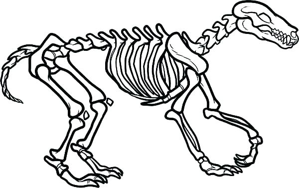 600x377 Skeleton Coloring Sheet Bones Coloring Pages Fossil Fighters