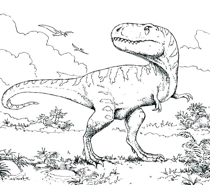 678x600 Fossil Coloring Pages
