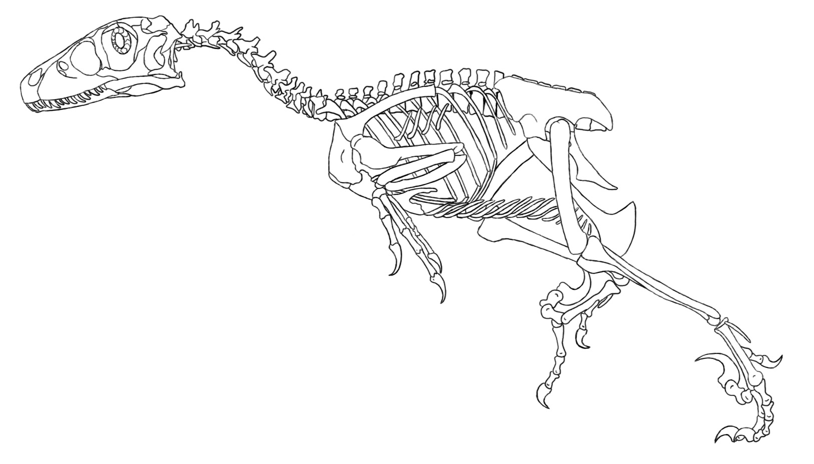 1626x928 Dinosaur Skeleton Coloring Page Free Download