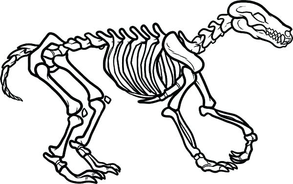600x377 Skeleton Coloring Page Skeleton Coloring Sheet Dinosaur Skeleton