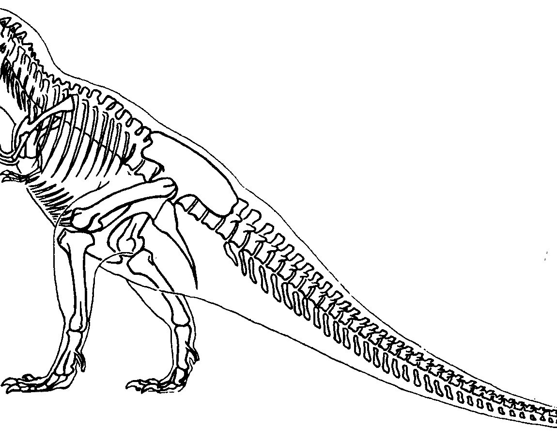 1150x918 Valuable Dinosaur Skeleton Coloring Page T Rex Unknown