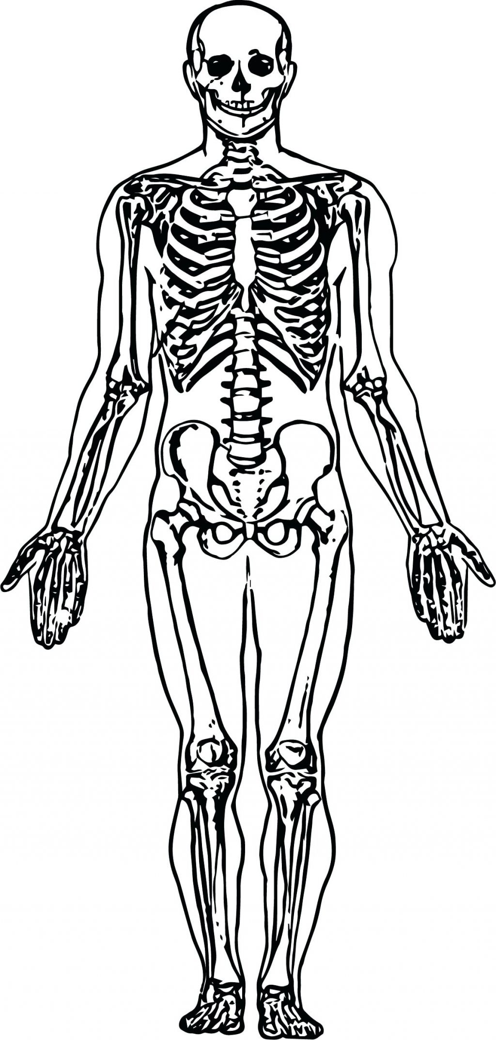 1024x2145 Coloring Pages Skeleton Coloring Pages Whole Picture Sketch