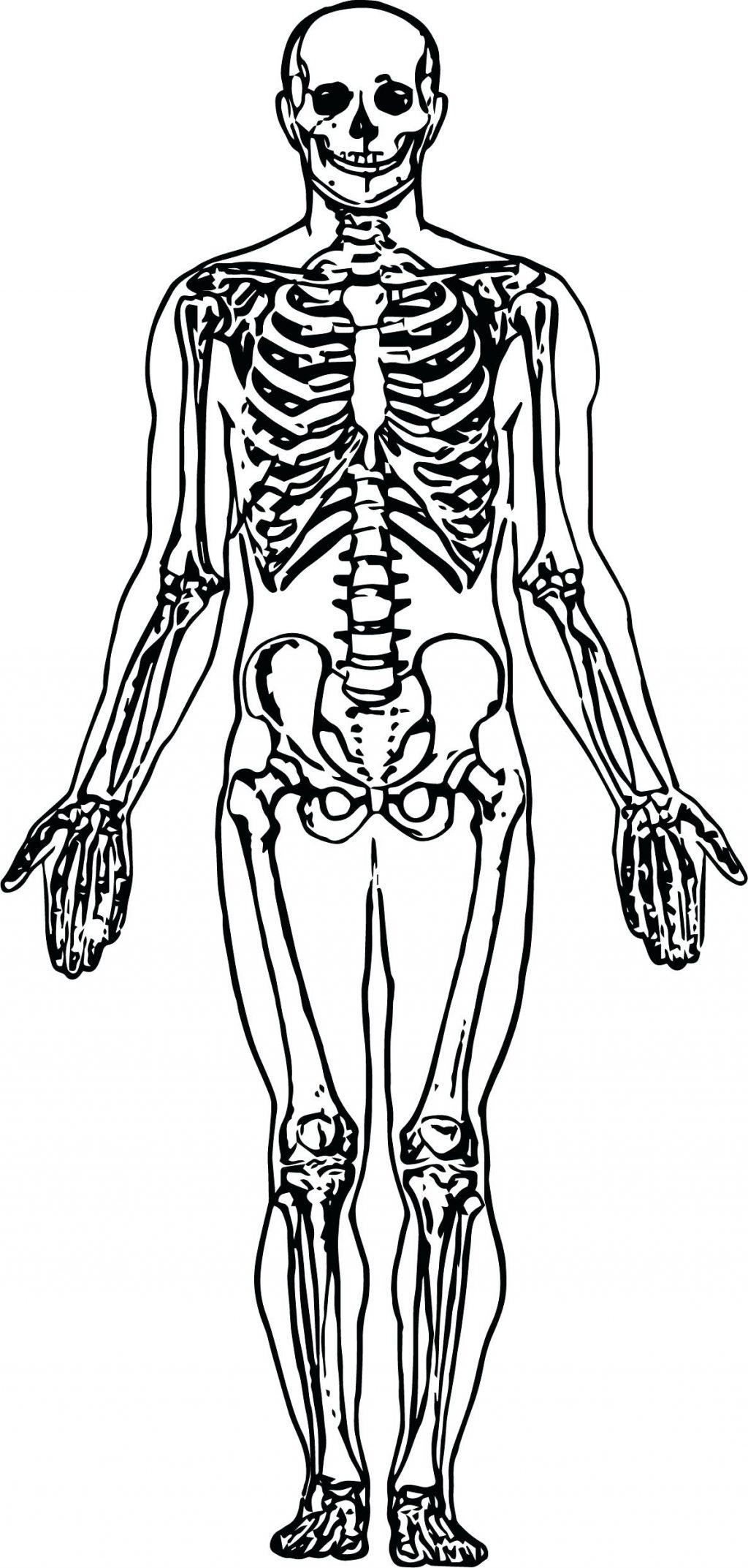 Dinosaur Skeleton Coloring Pages at GetDrawings   Free ...