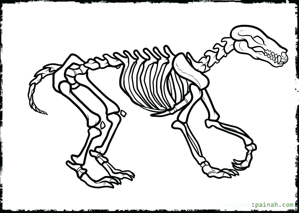 1024x728 Dinosaur Skeleton Coloring Pages