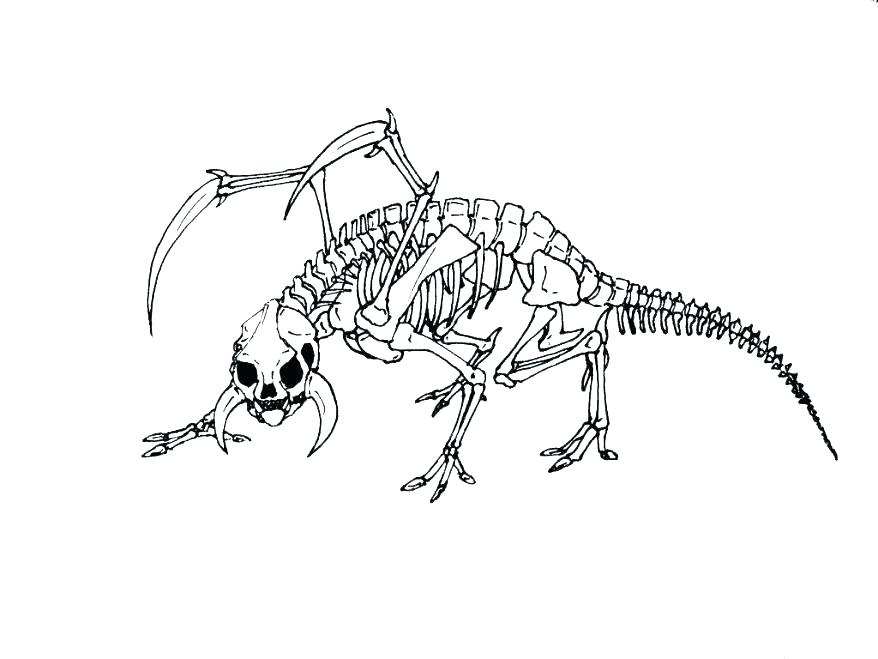 878x659 Human Skeleton Coloring Page