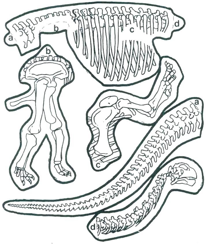 715x847 Dinosaur Bones Coloring Pages Dinosaur Color Page Baby Dinosaur