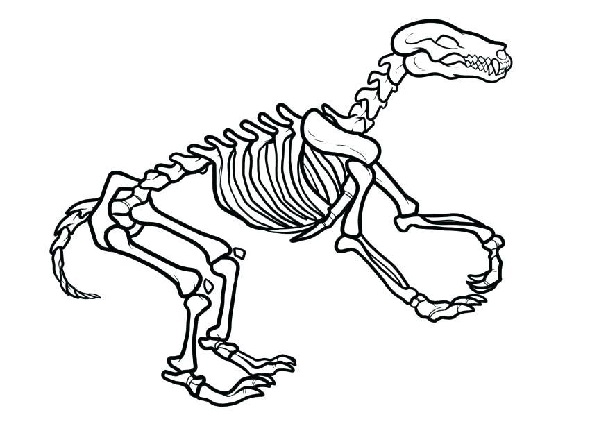 863x637 Dinosaur Bones Coloring Pages Dog Bone Page Free Skeleton Dinosaur