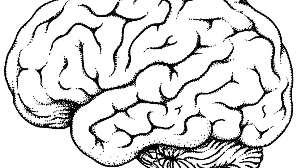 960x544 Free Printable Coloring Pages Of The Brain To Print For Kids Page