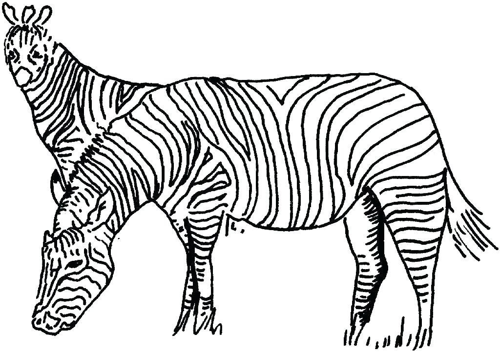 1024x722 Zebra Coloring Sheet Disco Ball Coloring Page Zebra Coloring Page