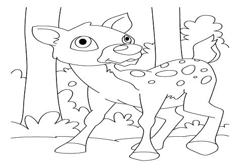 476x333 White Tailed Deer Coloring Page White Tailed Deer Coloring Page