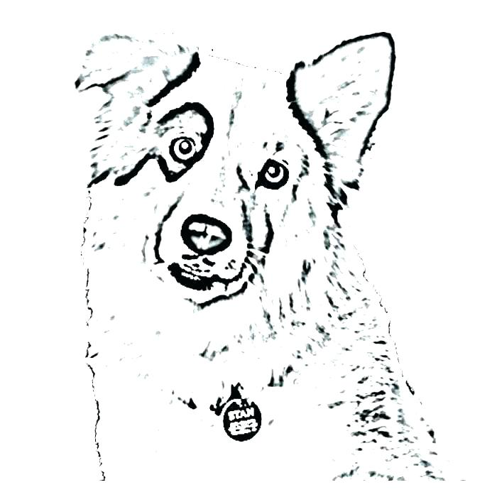 700x700 Dog And Cat Coloring Pages Printable Kids Coloring Coloring Pages