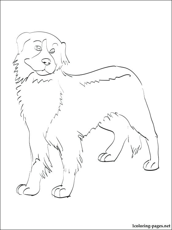 560x750 Dog Breed Coloring Pages Mountain Dog Coloring Page All Dog Breeds