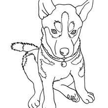 220x220 Cute Dog Coloring Pages