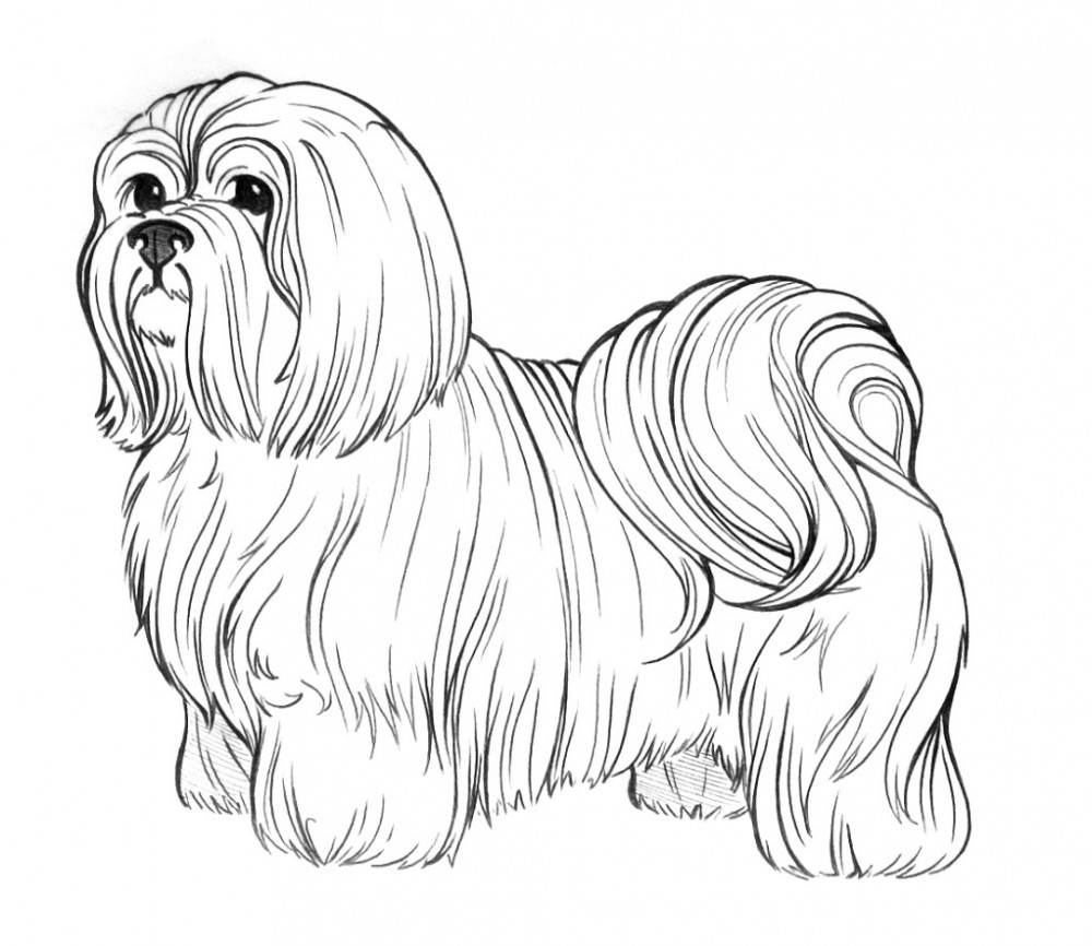 1000x866 Dog Coloring Pages For Adults