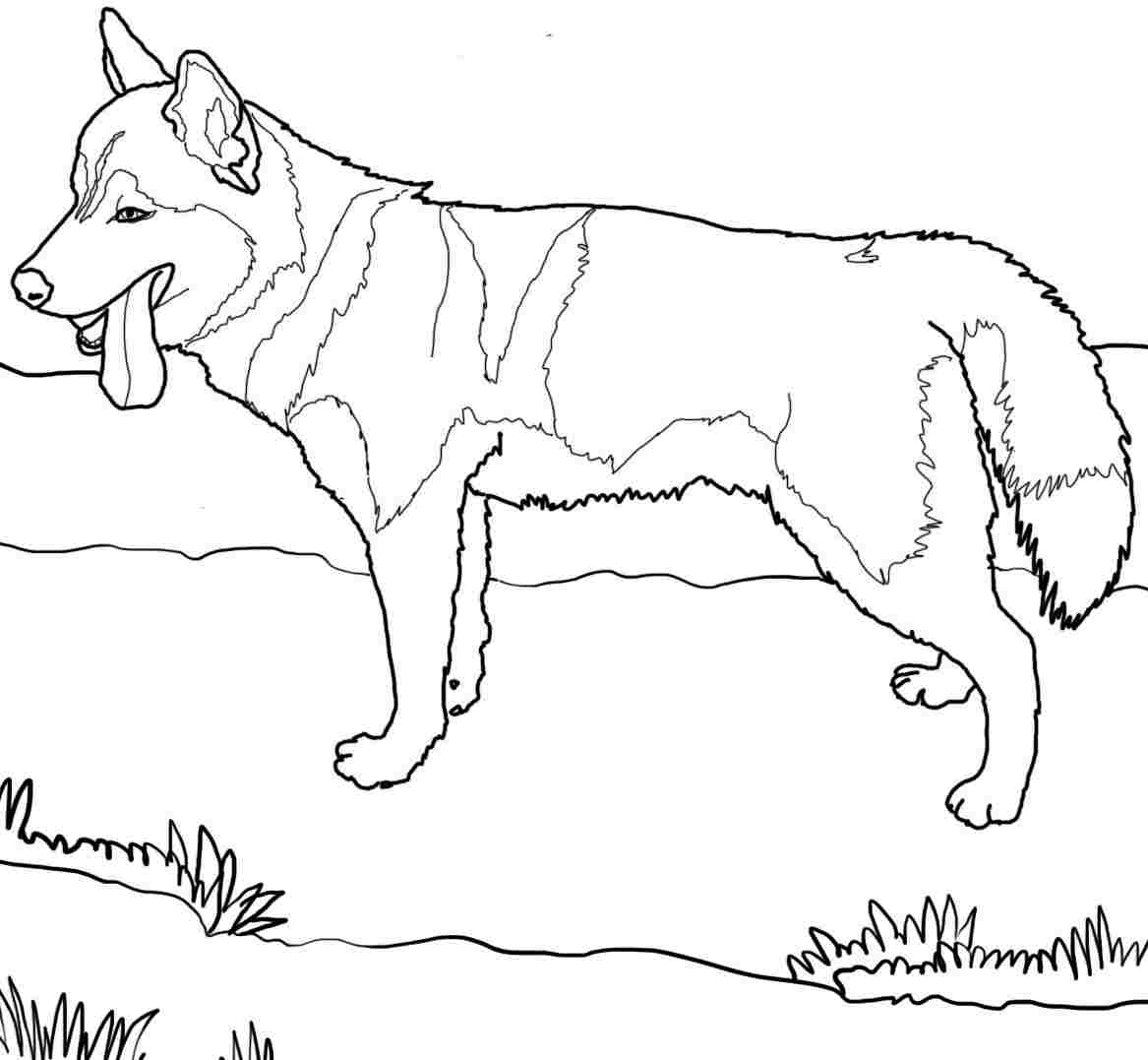 1167x1077 Amazing Dog Coloring Pages Printable Siberian Husky Coloringstar