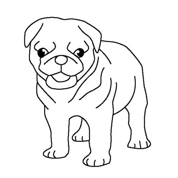 600x600 Pug Coloring Pages