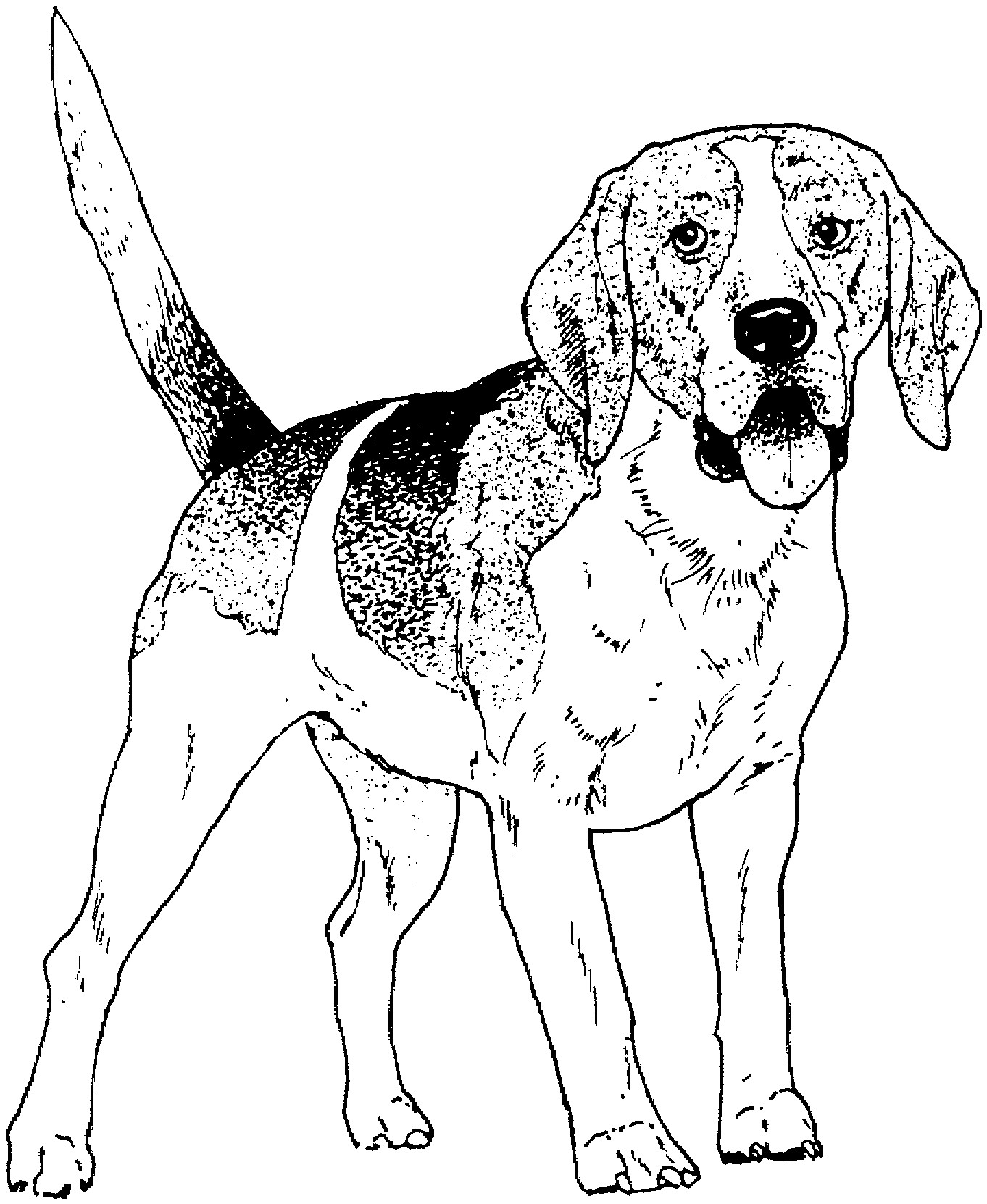 1362x1662 Bloodhound Dog Coloring Pages To Print Coloring For Kids