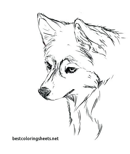 423x500 Husky Dog Coloring Pages Printable With Free Coloring Pages Husky