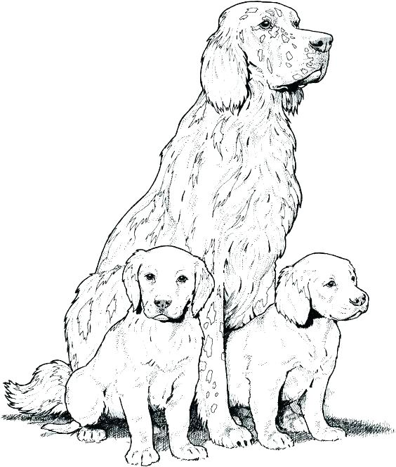 564x664 Charming Dog Coloring Pages Printable Cat Coloring Pages Gorgeous