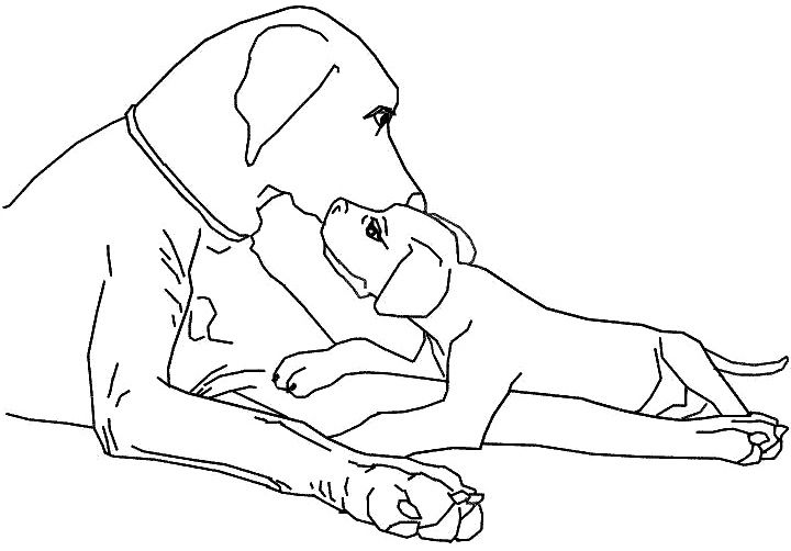 720x502 Family Dog Coloring Page Dog Family Dogs