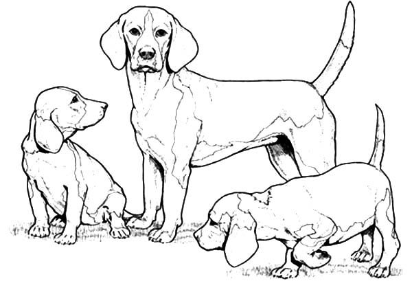 600x409 Chihuahua Dog Family Coloring Pages