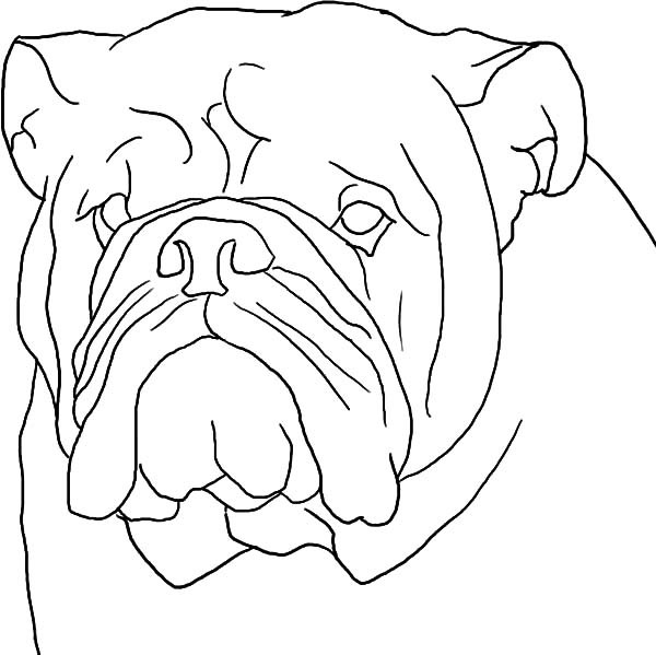 600x599 Boxer Dog Head Outline Coloring Pages Best Place To Color