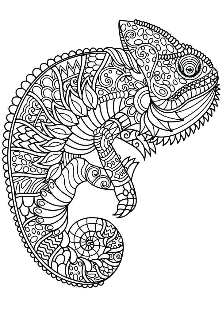 724x1024 Coloring Pages For Adults Pdf Plus Cat Animal Coloring Pages