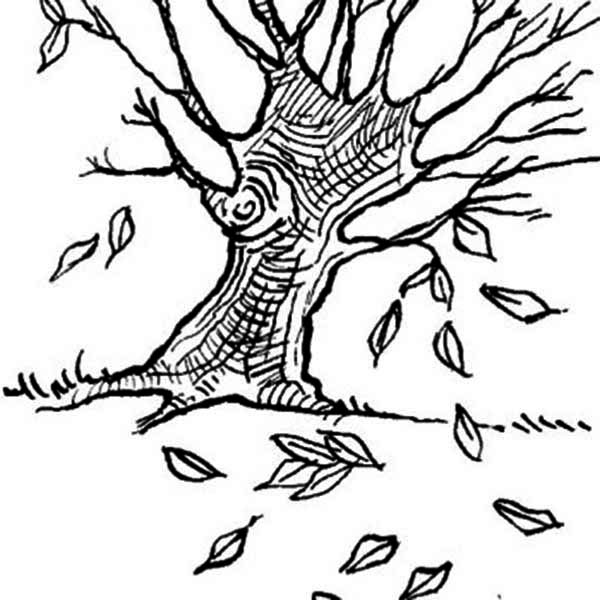 Dogwood Coloring Page
