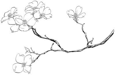 400x264 Dogwood Tree Flower Coloring Pages Sketch Coloring Page Pottery