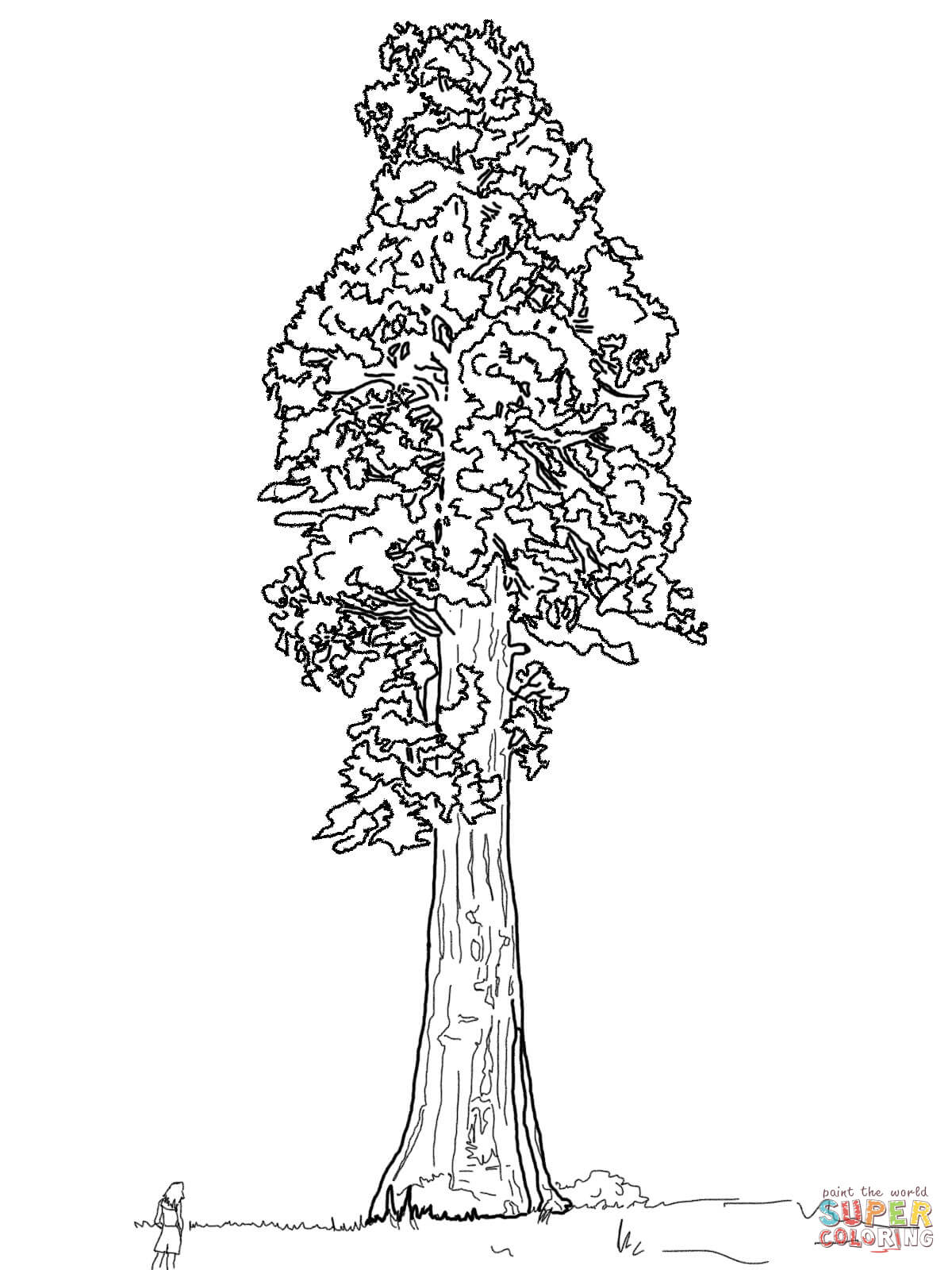 1200x1600 Dogwood Tree Coloring Page