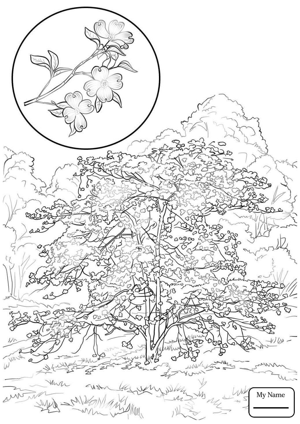 1040x1469 Dogwood Tree Coloring Pages Gallery Coloring For Kids