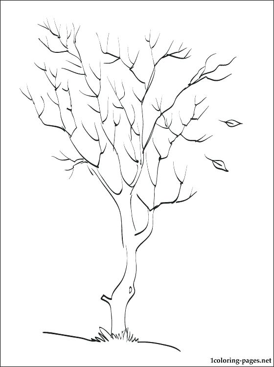 560x750 Fall Leaves Coloring Sheets Fall Tree Coloring Pages Maple Tree