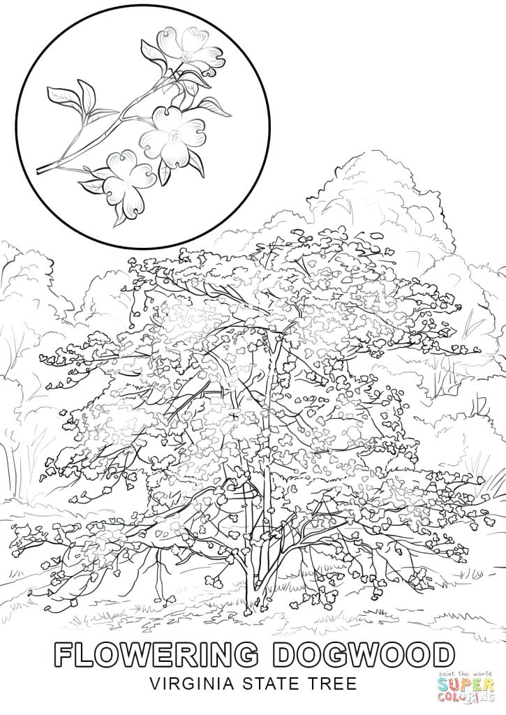725x1024 Free Printable Pictures Of Trees Eastern Pecan Coloring Page Free