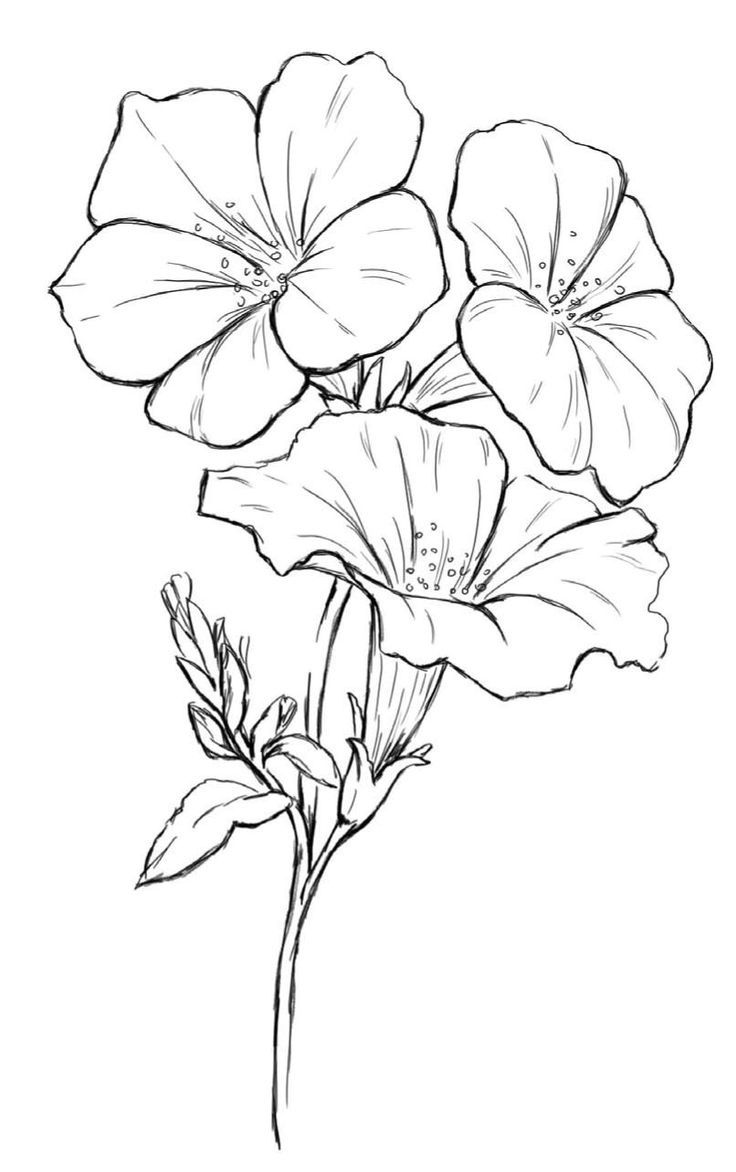 736x1172 Inspiring How To Draw A Dogwood Flower North Carolina State