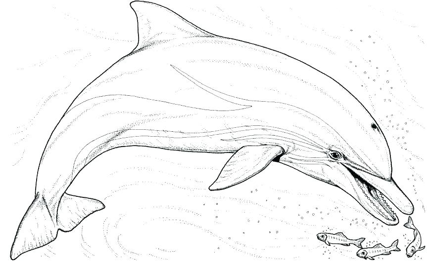 863x535 Coloring Pages Of Dolphins