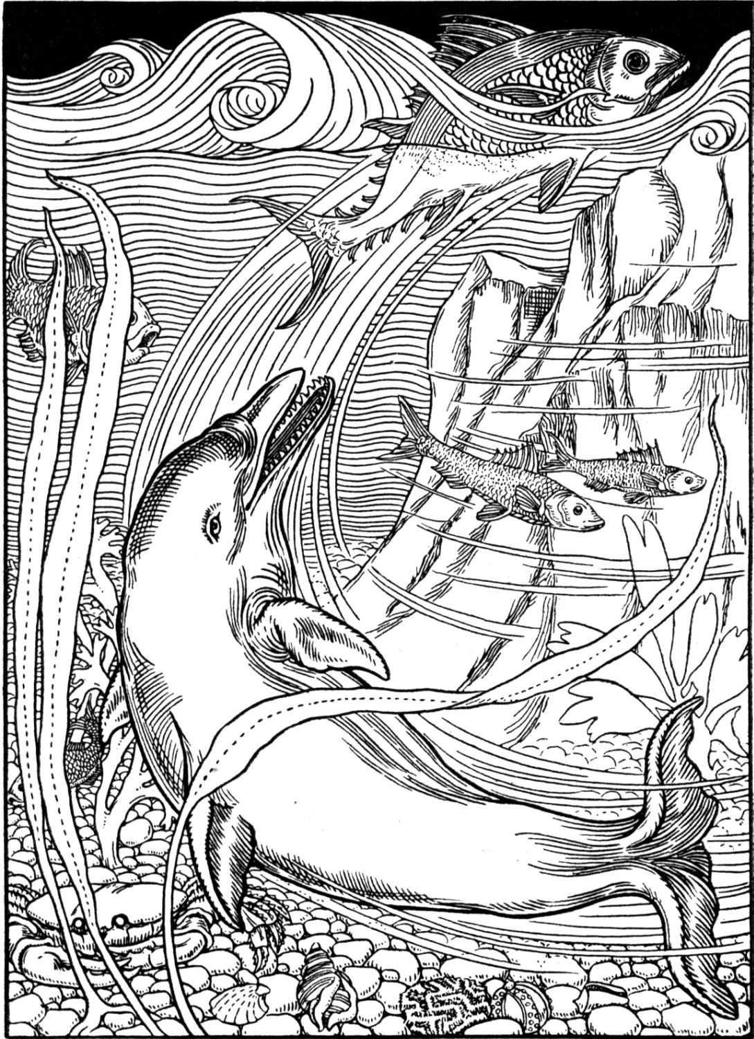 1089x1500 Dolphin Coloring Pages