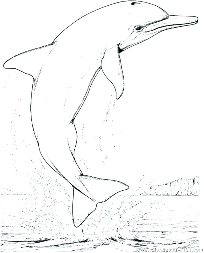 650x808 Dolphin Coloring Pages Printable