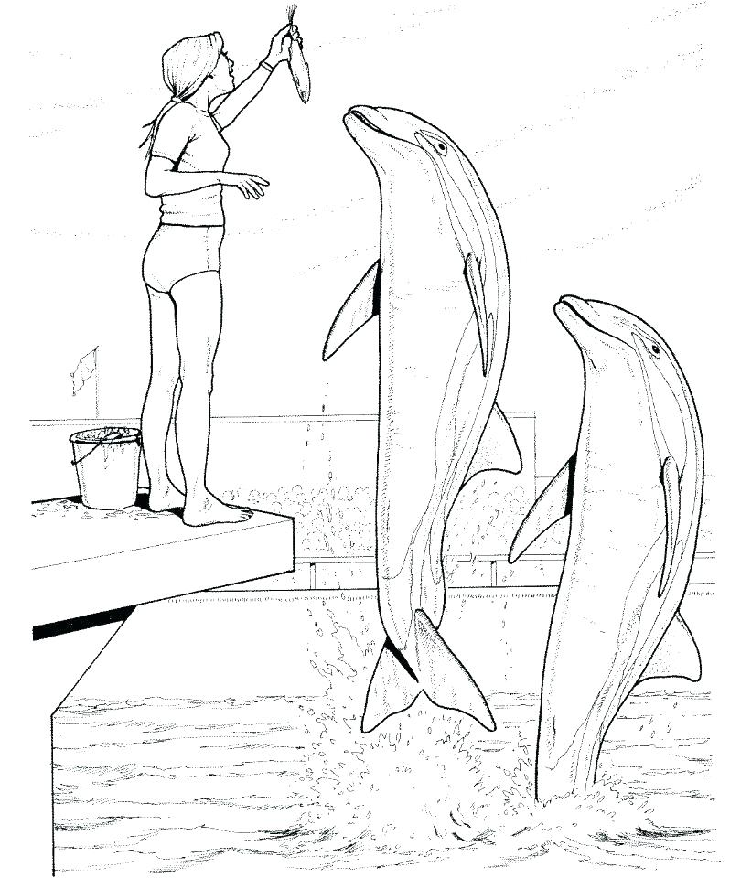 798x960 Dolphin Coloring Pages Printable Free Dolphin Coloring Pages