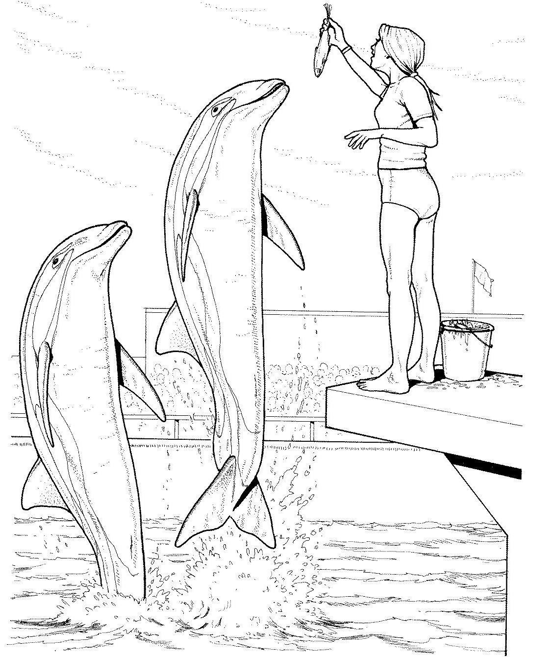 1114x1340 Pioneering Winter The Dolphin Coloring Pages Dolphins Jumping Out