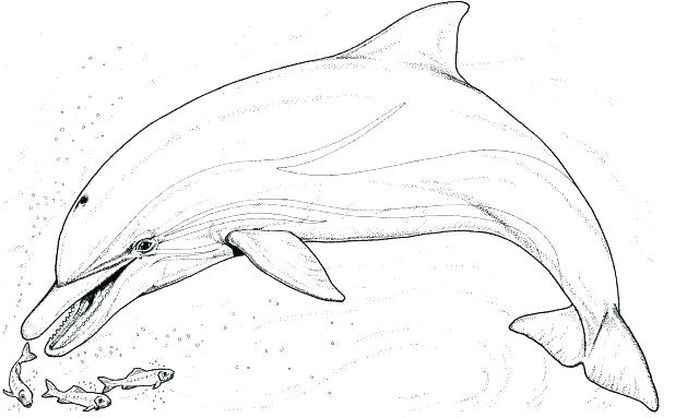 618x383 Dolphin Coloring Pages Printable Dolphin Coloring Pages Free